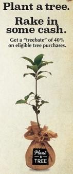 treee_crop